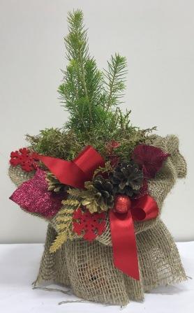 ЭкоМиниЕлка - это живая новогодняя елка.